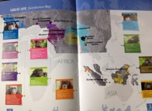 peta-sebaran-empat-kera-besar-di-dunia-capture-dari-majalah-great-apes-survival-foto-dok-yp-578740123e23bdb304ec620d